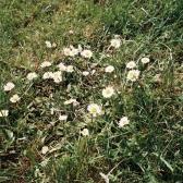 180711 jennierubyjane pretty pretty daisy_1