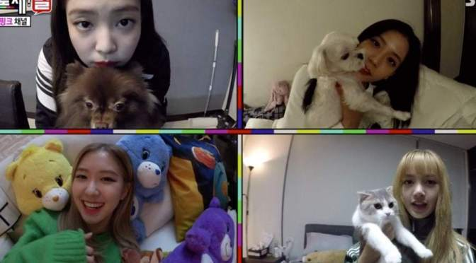 [NEWS] BLACKPINK Shows Off Their Adorable Pets on SBS We Will Channel You
